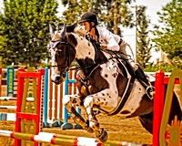 Horse Competion - SAHJA